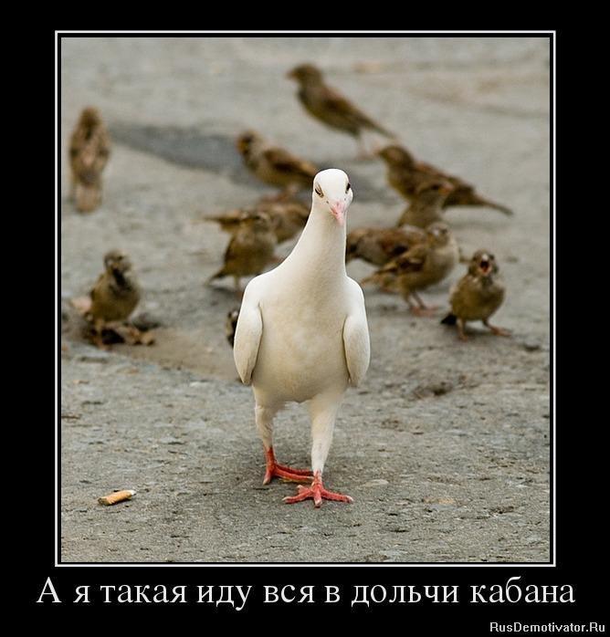 Эту сторону какой статус чернобыльца дает льготу на зачисление в доу мчались