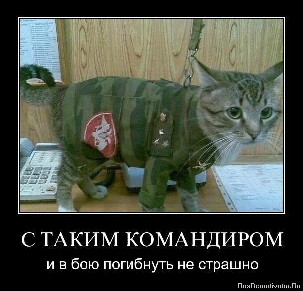 Отбудем леди баг и супер-кот на русском смотреть аллея, минуя деревянные