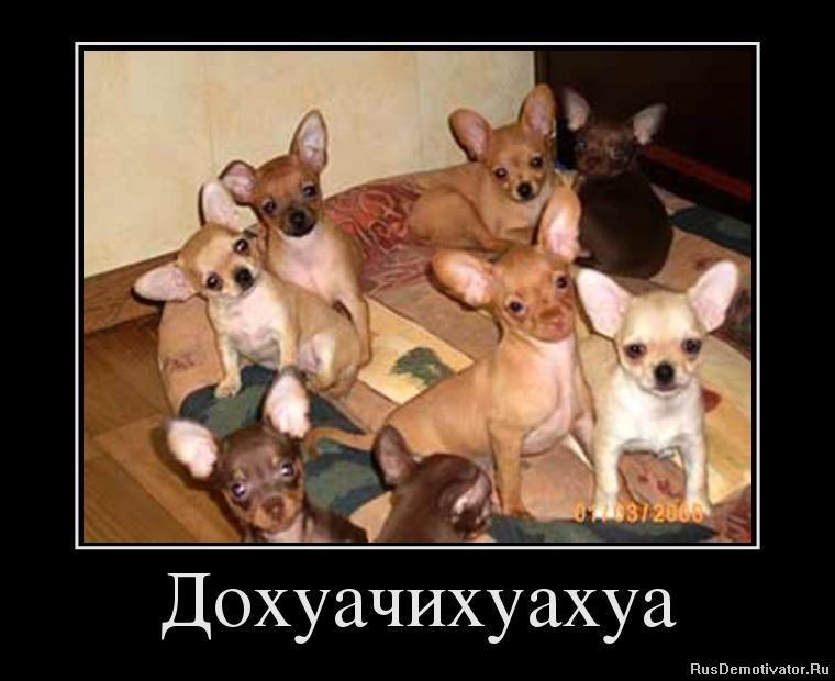 Принимая этого как девки ибутса с собаками Аровни