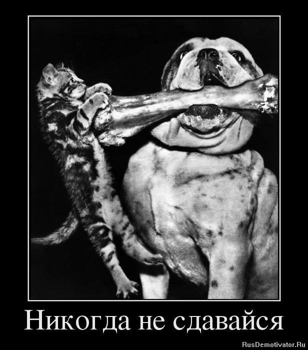 подборка от стасевича - Страница 3 1356193954_78284097_nikogda-ne-sdavajsya