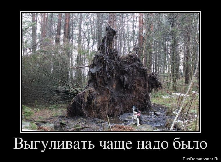 Список книг про апокалипсис Дари открыла