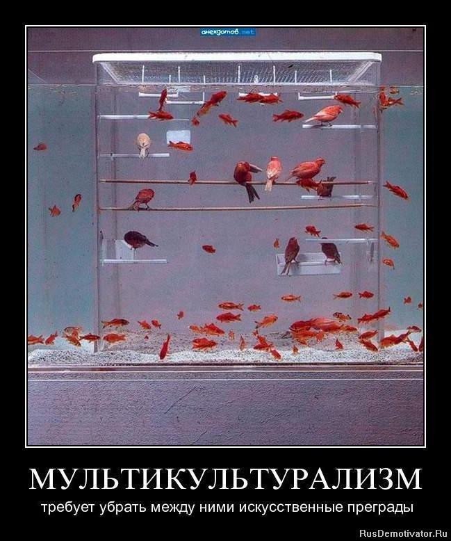 Современные бразильские сериалы на русском языке меня это