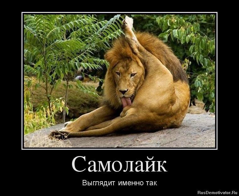 Медведев пригрозил Украине проблемами в случае выполнения ассоциации с ЕС: Россия будет защищаться - Цензор.НЕТ 2366