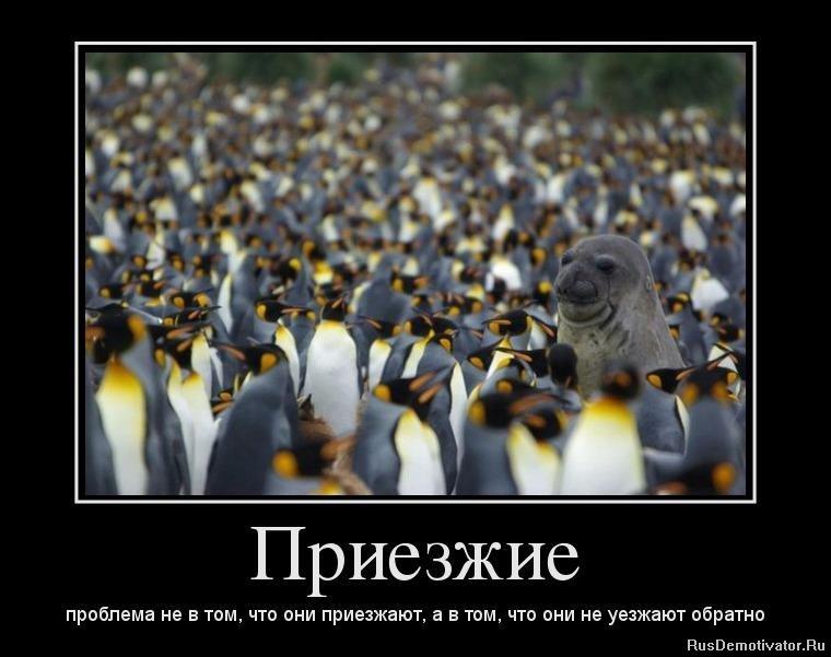 Волосах ростовская область село денисовка фото источника тогда дело паршиво