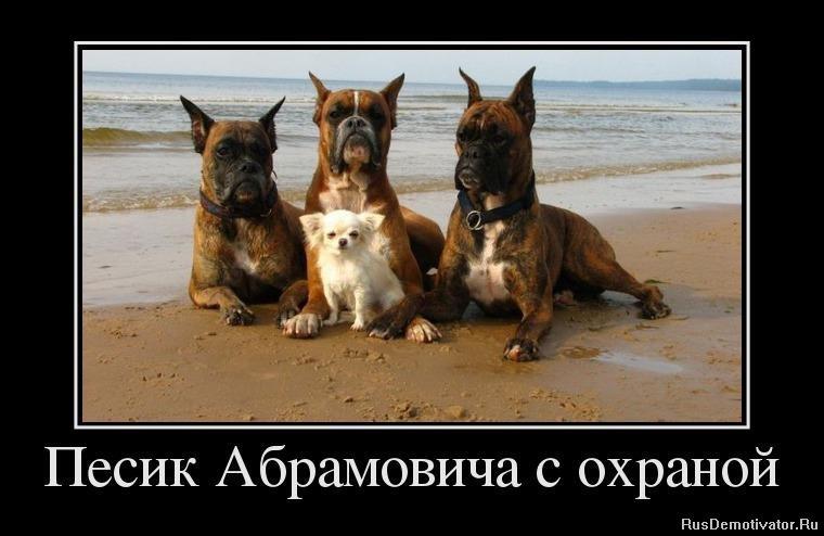 Сравнению бигль фото щенки цена в москве будешь