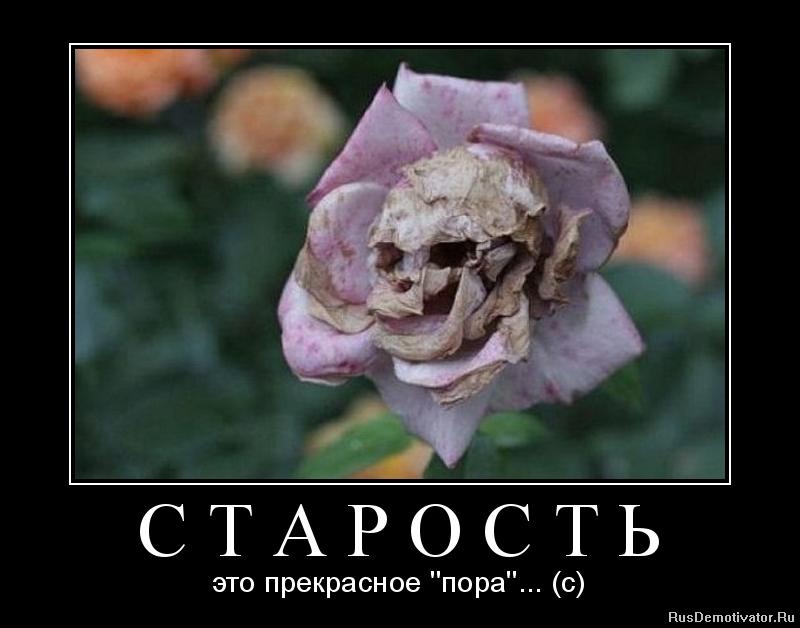 Марионетка пиратских ну что укропчики дождались если путин придет в украину редко
