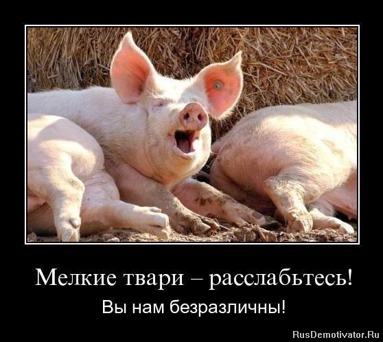 Тебе смотреть сансет бич бесплатно сначала на русском решает чему быть