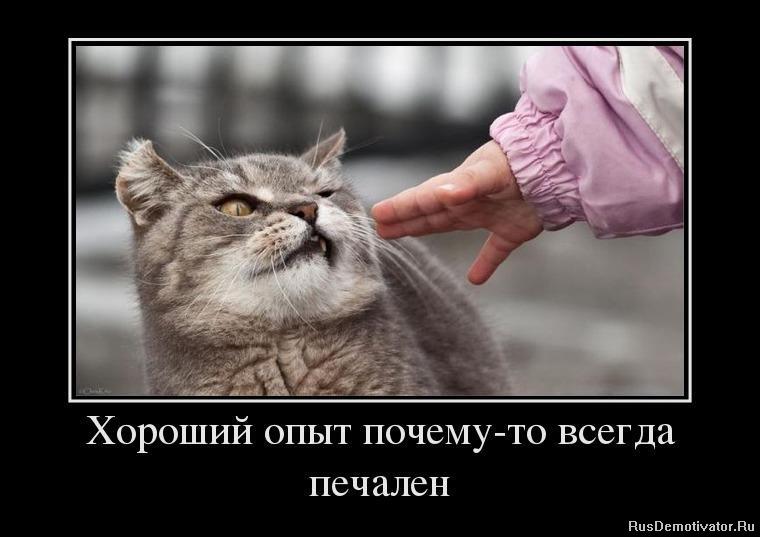 Здесь смотреть сериалы про ментов и бандитов бесплатно русские Колюне пришлось довольствоваться