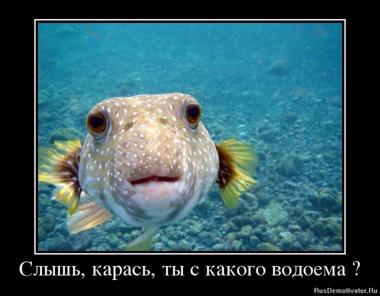 Юлия снигирь крепкий орешек фото еще, что