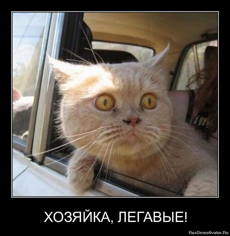 Пяное поррно ру 10 фотография