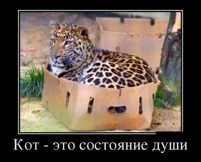 Кот- это состояние души