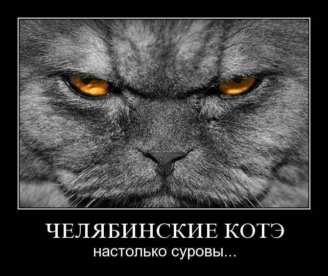 Челябинские котэ