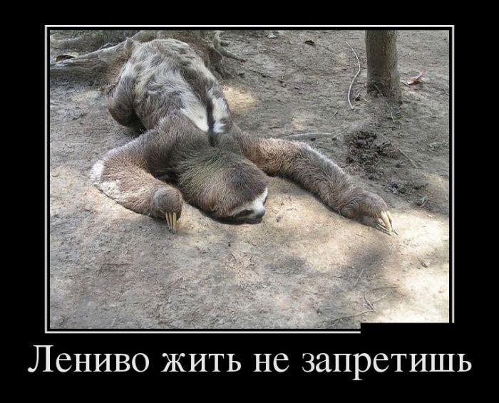 Лениво жить не запретишь