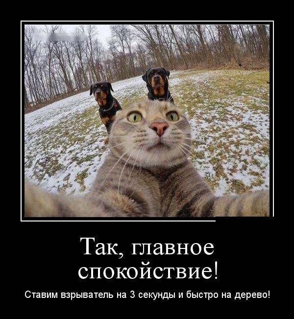 Так, главное спокойствие!