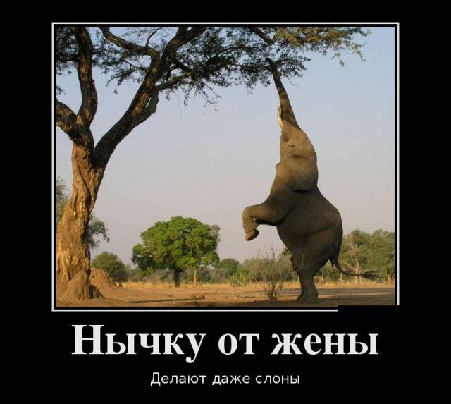 Нычку от жены делают даже слоны