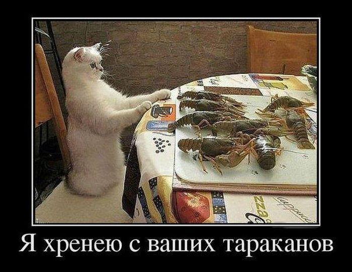 Я хренею с ваших тараканов